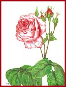 roseColorPencil