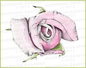 roseWatercolor